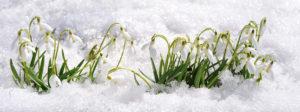 Snowdrops MLD Support Association UK